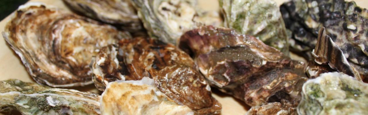 Skaldyr - her østers - spises før kød. Foto: Simon Sørensen