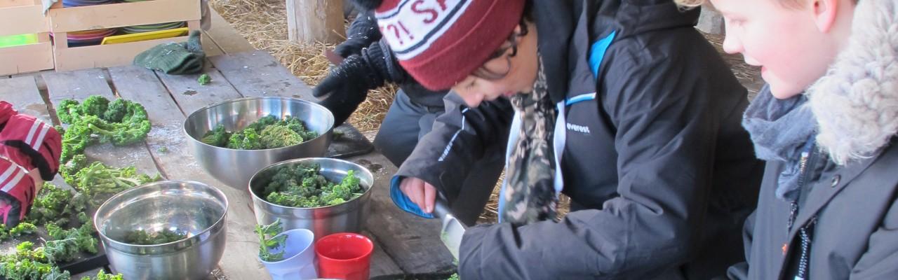 Drenge hakker grønkål - en grøntsag, der hører vinteren til. Foto: Anne Bech