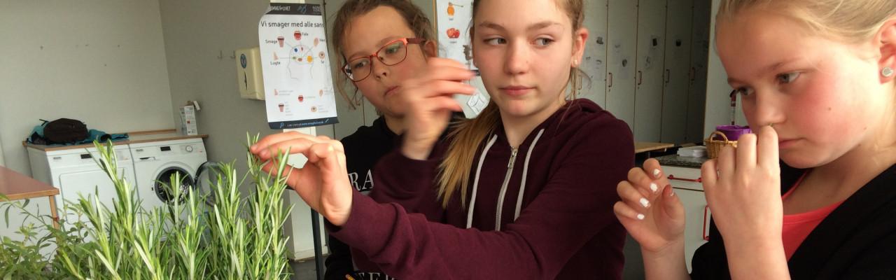 Elever fra Agedrup Skole indprenter sig duften af rosmarin. Foto: Eva Rymann