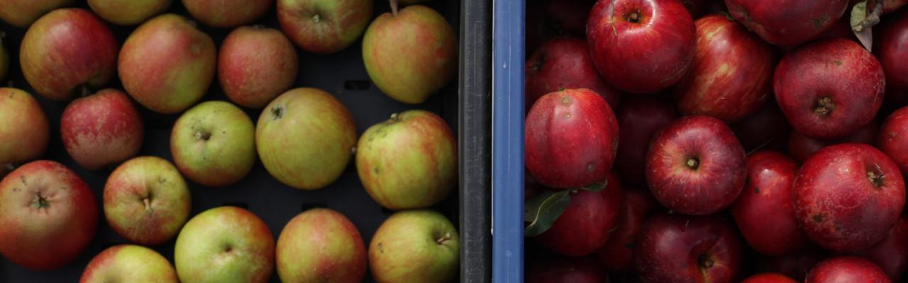 Fynske æbler. Foto: Stagbird