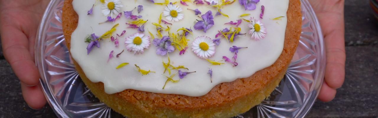 Citronmåne med spiselige, vilde blomster: Bellis, mælkebøtte, korsknap, rød tvetand og martsviol. Foto: stagbird.dk.