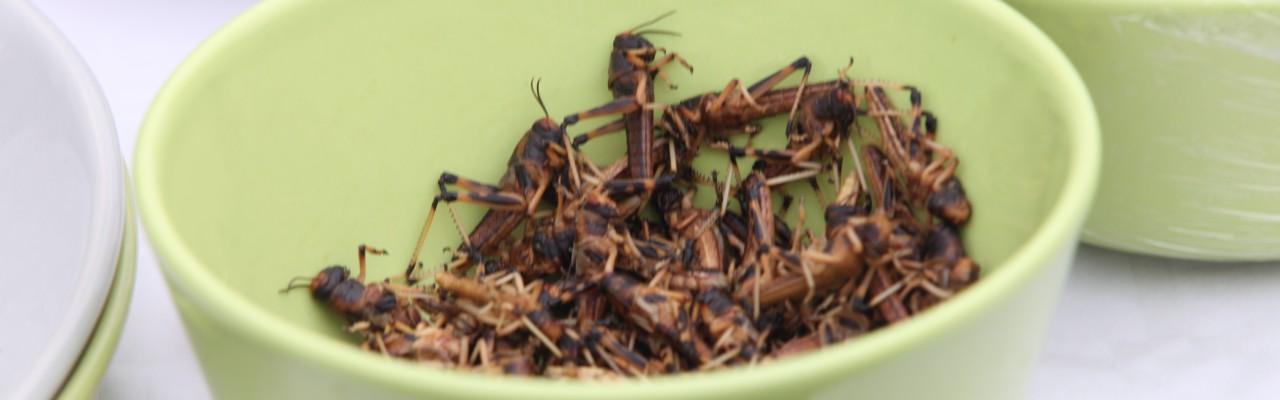 Græshopper. Foto: Stagbird