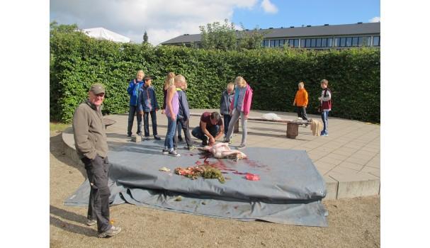 Flere af eleverne fik mod på at gå tæt på. Foto: Anne Bech
