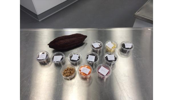 Forskellige slags chokolade og en kakaobælg. Foto: Eva Rymann